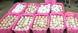 16東村山テニス講習会使用球.jpg